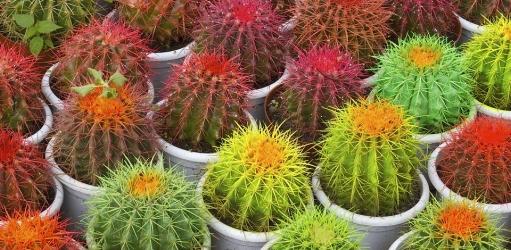 Woontrend: het botanische interieur